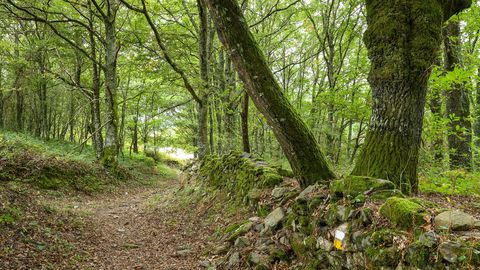 Una parte del recorrido discurre entre bosques frondosos