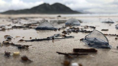 Carabelas portuguesas en la laguna de Louso tras la ruptura de mediados de noviembre