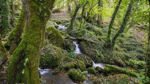La ruta discurre por un territorio de frondosa vegetación