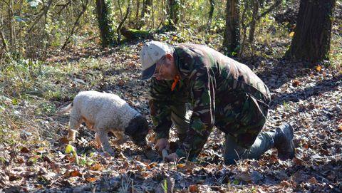A la caza. La perra Macchia, junto con el cazador Adriano, recorre los bosques del Valle de Samoggia a la caza del tartufo bianco que se encuentra enterrado entre las raíces.