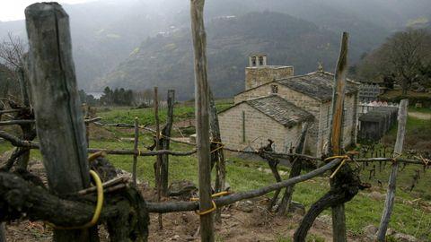 Viejas viñas junto a la iglesia románica de Atán (Pantón), que formó parte de un antiguo monasterio