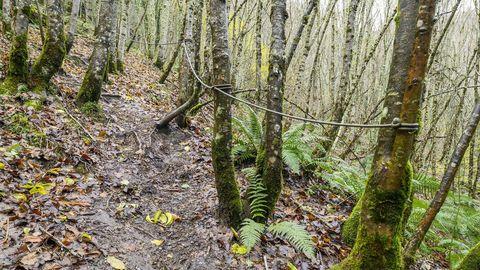 Unas cuerdas atadas a los árboles facilitan el paso en un tramo empinado del camino