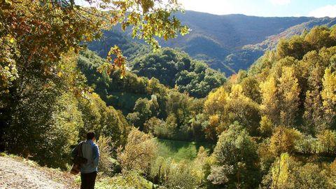 El bosque de la Devesa da Rogueira se extiende por las faldas del monte Formigueiros
