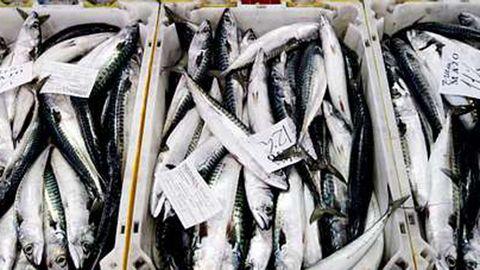 pesca de xarda