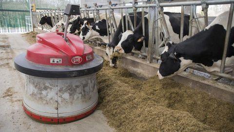Robot para acercarle la comida a los animales en la Granxa Moreira de Brandoñas (Zas)