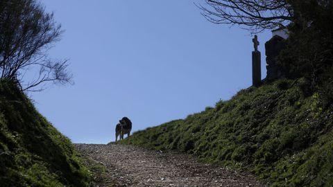 Un perro guarda el camino en las cercanías del Alto do Poio
