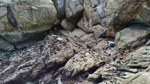 Fardos encontrados en rocas de la ría de Arousa, y que se corresponden con el alijo del fin de semana