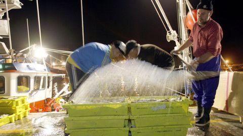 Las organizaciones de productores pesqueros intentan contribuir a mejorar la comercialización de las capturas de la flota, como las de este barco que las descarga en Burela (foto de archivo)