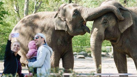 Visitantes del zoo de Berlín disfrutan ante los elefantes