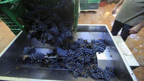 Entrada de uva en una bodega de Chantada durante la pasada vendimia