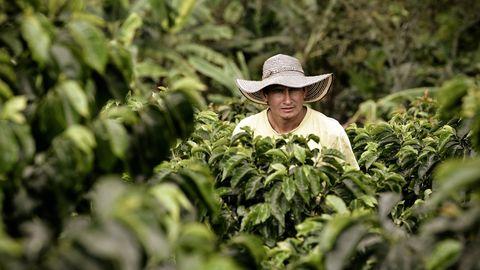 La producción de café en Colombia ha caído un 28 % a causa de la pandemia
