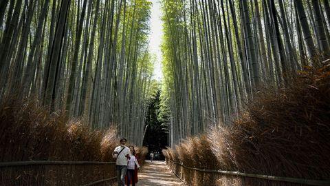 Bosque de bambú en Kyoto. En abril, Japón recibió menos de 3.000 turistas extranjeros, lo que supone un 99 % menos de lo habitual