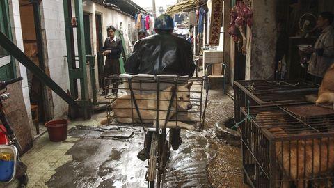 Comer carne de perro es una práctica habitual en algunas localidades chinas