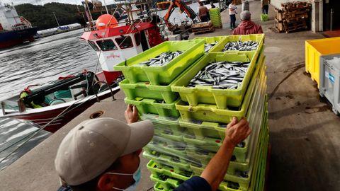 Varios pescadores descargan bocarte en la Rula de Avilés