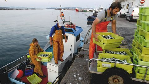 Tripulantes de un pesquero de bajura, descargando sus capturas en un puerto de Arousa (imagen de archivo)
