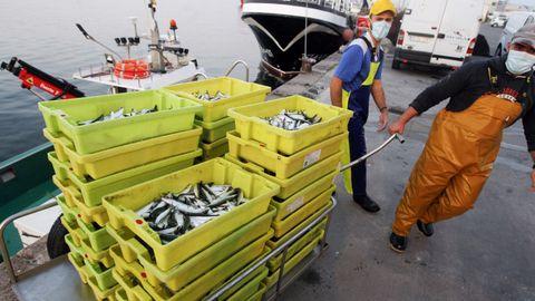 Descarga de sardina en un puerto gallego, en una imagen de archivo