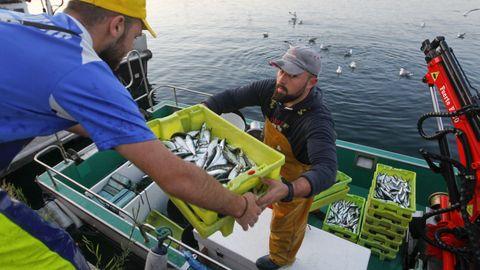 Pesca de sardina para San Juan.