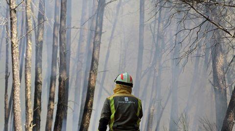 El incendio de A Ermida quemó miles de pinos