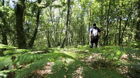 En este bosque de Antas de Ulla se halla el centro geográfico de Galicia