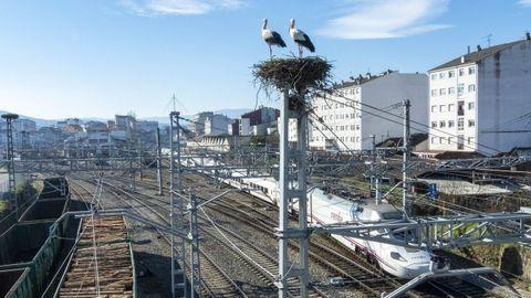 Una pareja de cigüeñas en un nido sobre una torreta de la estación de Monforte, en una imagen de archivo