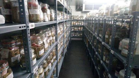 Imagen del interior de la cámara donde están conservadas las semillas de especies pradenses