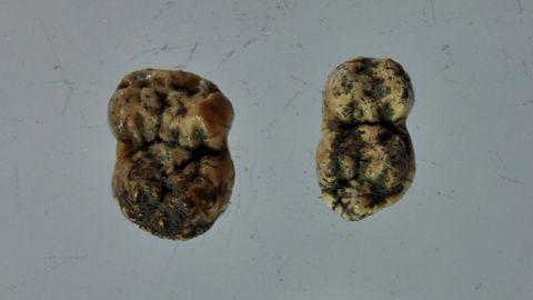 Dientes de cerdo extraídos de una tumba del cementerio medieval de Cereixa, que ahora se está intentando datar mediante un análisis de carbono 14
