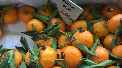 Las clementinas están en plena temporada