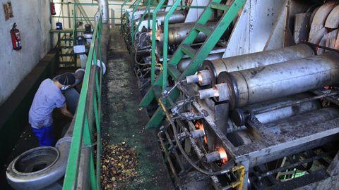 Alibós procesa en poco más de tres meses 7 millones de kilos de castaña
