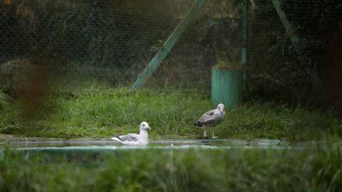 A lo largo de la ruta se encuentra un centro de recupeación de animales
