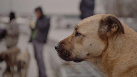 Fotograma de «Stray», película dirigida por la documentalista de origen hongkonés Elizabeth Lo