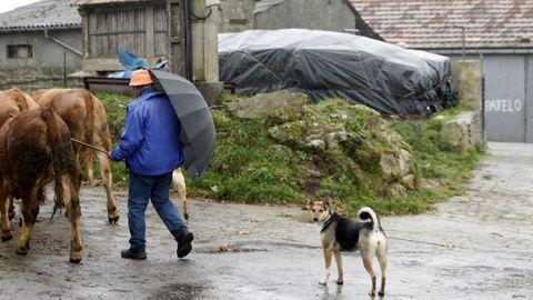 La aldea de Enxerto, donde se detectó el primer caso de vacas locas en España