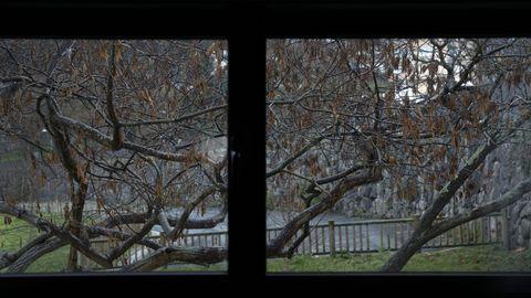 Cuentan con varios árboles en la zona de terraza que también se pueden ver desde alguna de las habitaciones