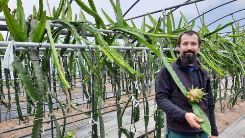 Jorge Carballeira en la plantación. En la imagen con una fruta que es roja por dentro