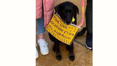 Los animales también exigen una gestión ética del albergue