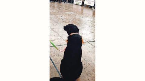 Los perros también secudan la protesta