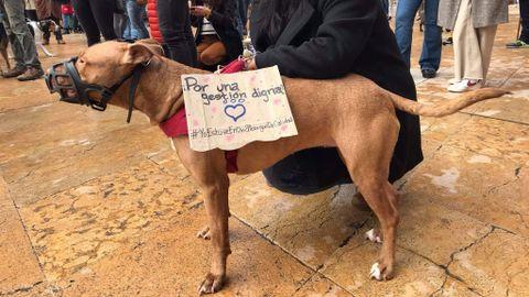 Un perro con un cartel que reclama una gestión digna del albergue