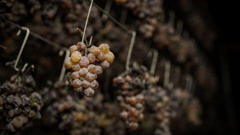 las uvas han de secar antes de la fermentación