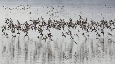 Observar aves en el itsmo de A Lanzada