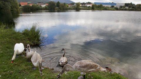Pegada a la PO-548 Valga esconde la laguna de Mina Mercedes