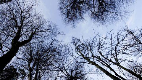 El parque de O Castriño  para relajarse en medio de árboles muy cerca del centro de Vilagarcía