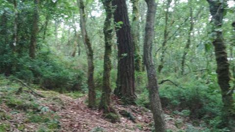 La sociedad forestal tiene más de un centenar de socios