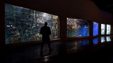 La nuevas estrellas del Aquarium. Los bebés pulpo que nacieron en estas tres semanas de semiconfinamiento  son una de las sensaciones del Aquarium. Para visitarlo, al estar el aforo reducido al 30 %, hay reservar entrada. Un proceso sencillo a través de su web, que también es necesario en el Planetario y en los talleres de la Domus