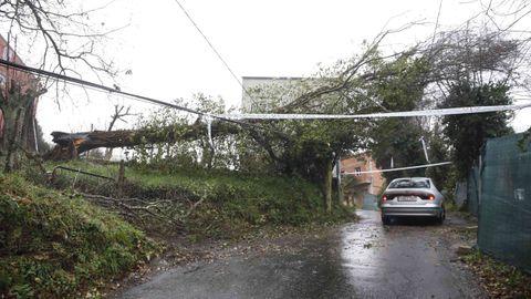 Árbol caído en la Rúa Xoán Rico Pérez, que da acceso desde Fontiñas al Rato