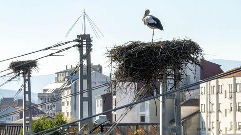 Una cigüeña en un nido sobre una torre de catenarias en la estación ferroviaria de Monforte