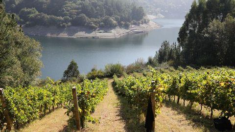 Terras de Burón: viñas junto al río Navia en Negueira de Muñiz