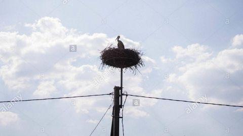 Plataforma elevada que protege al poste eléctrico del nido de la cigüeña