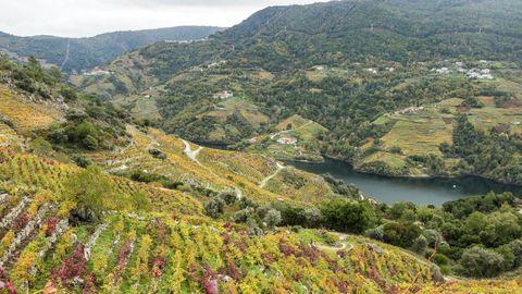 La extensión y la complejidad del territorio hizo que la Unesco pidiese documentación adicional sobre la candidatura de la Ribeira Sacra. En la imagen, paisaje del Sil en la ribera de Amandi, en Sober
