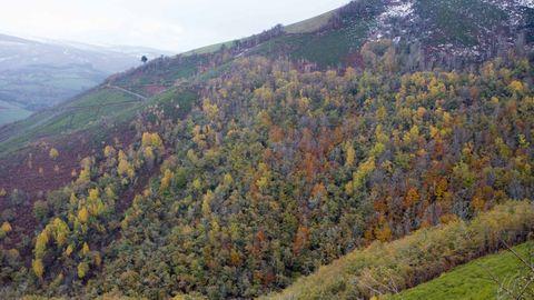 En Os Ancares hay abudantes masa de frondosas, incluidas en un territorio que es reserva de la biosfera
