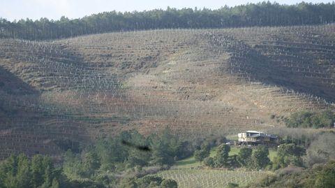 Viñedo acondicionado por la bodega Rectoral de Amandi en una ladera de Quiroga