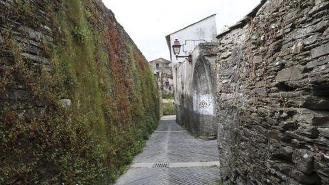 La limpieza de las hierbas de la Muralla no se puede realizar entre mayo y agosto porque anidan los vencejos